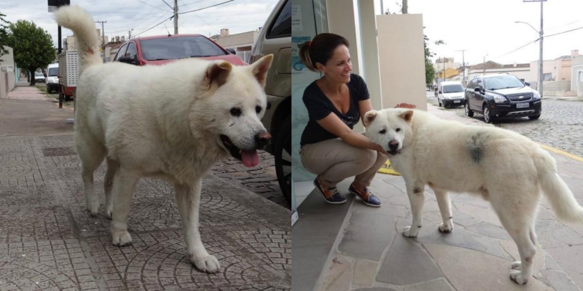 Thor perro akita Cláudio Cantarelli Saionara Freitas