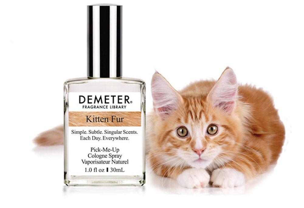 Crean perfumen para oler como lindos gatitos