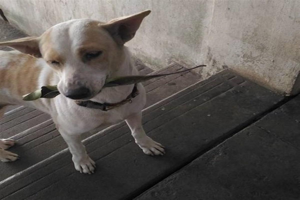 ¡Awww! Perro callejero trae regalos a la mujer que le da de comer