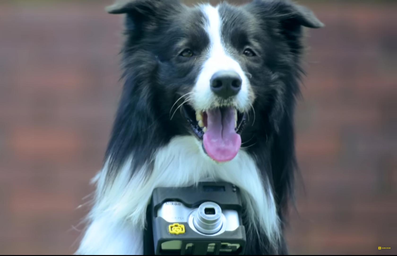 Gracias a Heartography existe el primer fotógrafo canino que toma fotos con su corazón