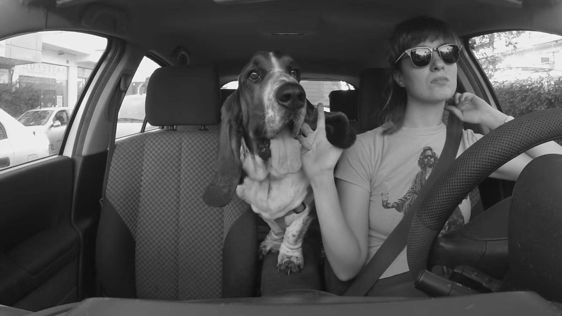 """""""Driving Ahound"""" es la rola perfecta para pasear con tu perro donde sea"""