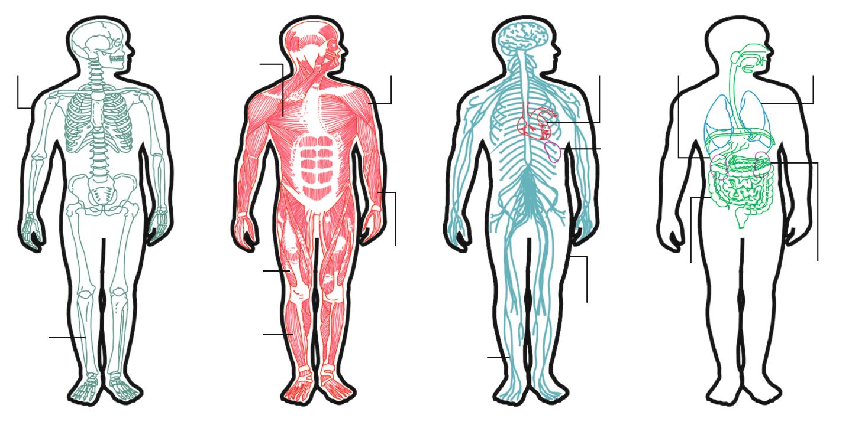 El Cuerpo Humano: ¿Cuántas Calorías Tiene El Cuerpo Humano?