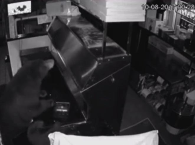 Una mamá oso y sus dos cachorros entraron a una pizzería