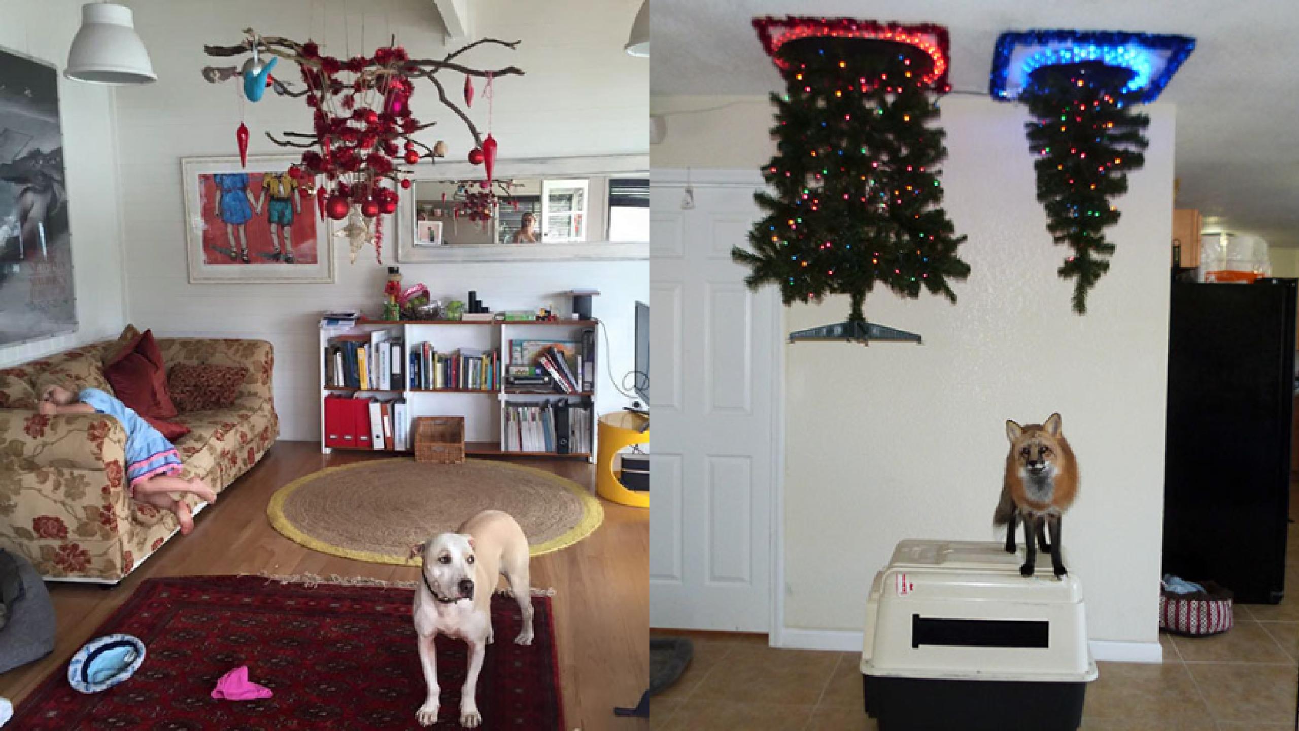 dc4db0aeabd Algunas ideas para proteger tu árbol de navidad de perros y gatos