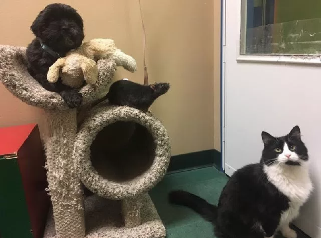 perro-gato-rata-amigos