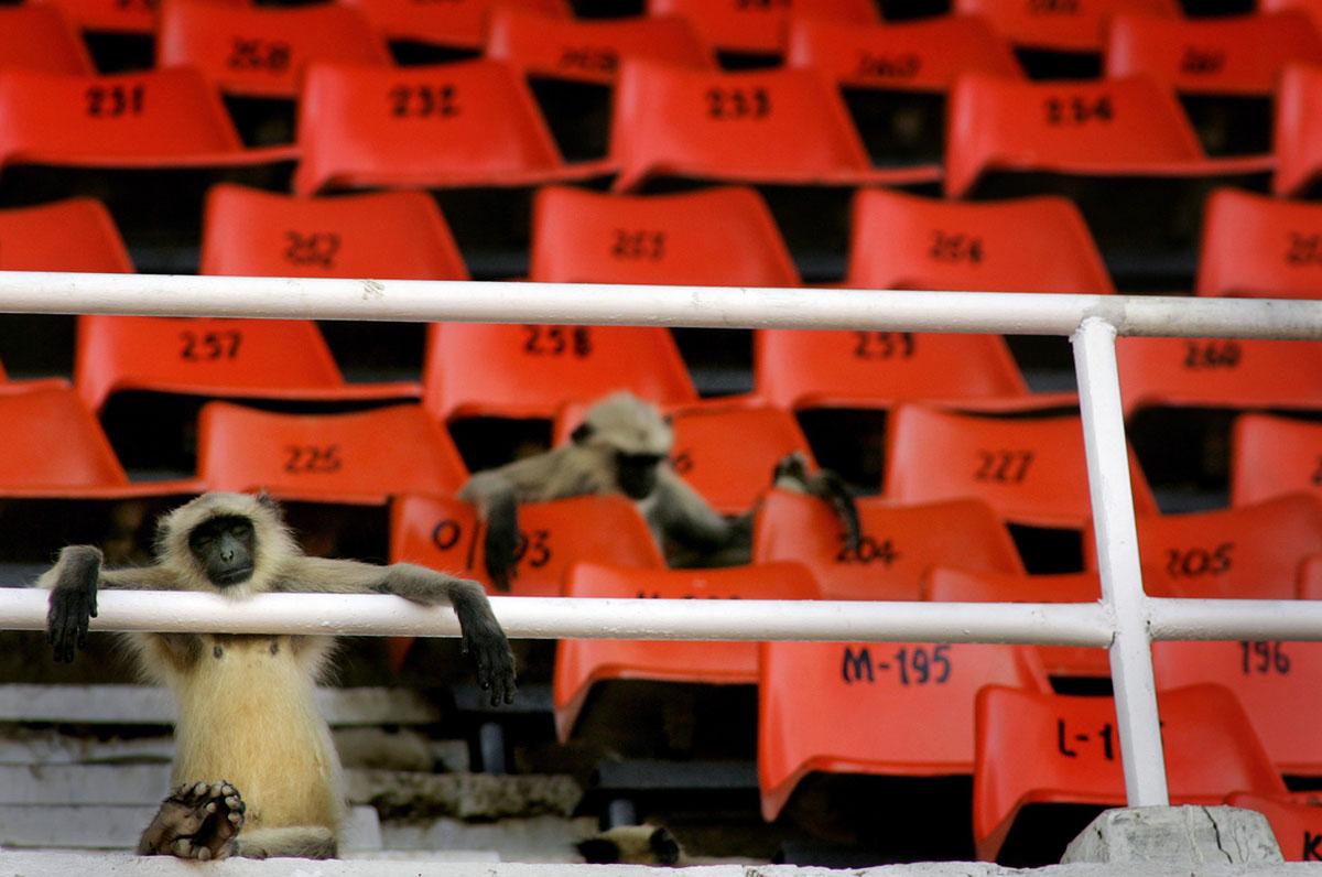 Animales que invadieron el campo de juego de deportes