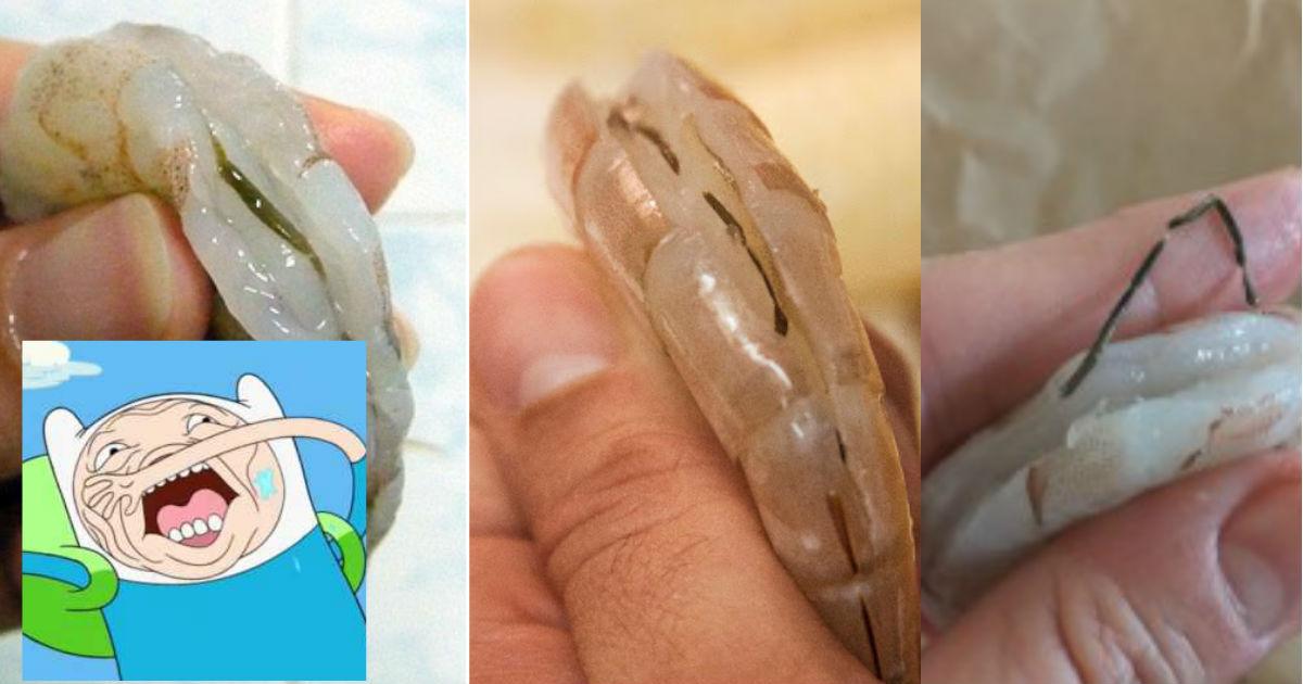 Qué es la línea negra del camarón? Sin rodeos: es CACA
