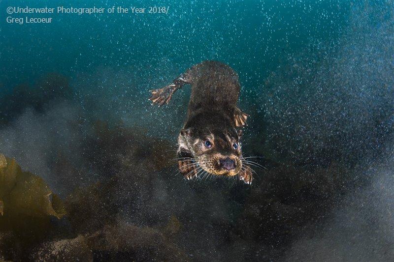 Fotógrafos ganaron premio a la mejor fotografía bajo el agua