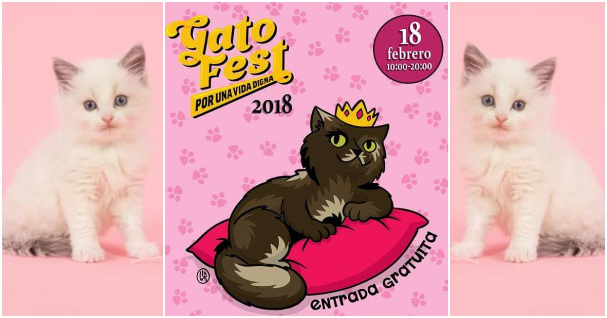 Para los que amamos a los gatos, se acerca Gato Fest 2018