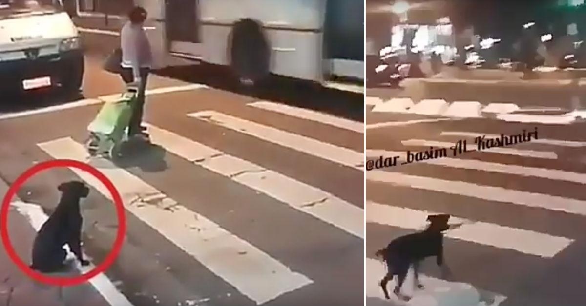 video-viral-perro-callejero-respeta-semaforo