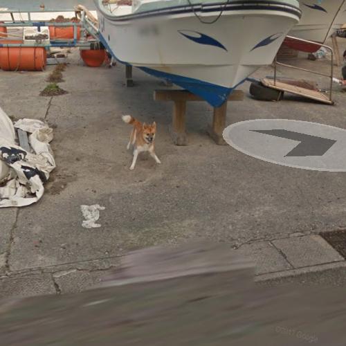 Perrito persigue al camion de Google Street View