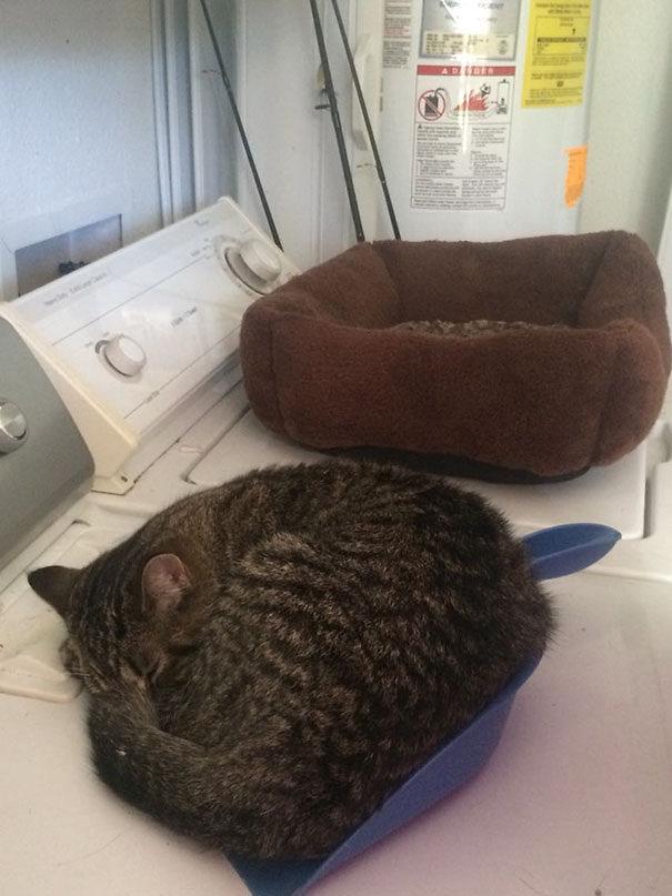 imagenes-gatos-estupidos-fotos-graciosas-felinos-tontos-galeria