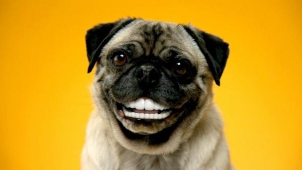 Curiosidades de los perritos que probablemente no conoces