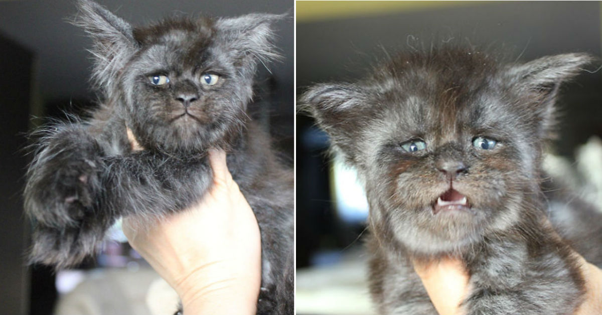 gato-cara-humano-viraliza-redes-tierno-internet