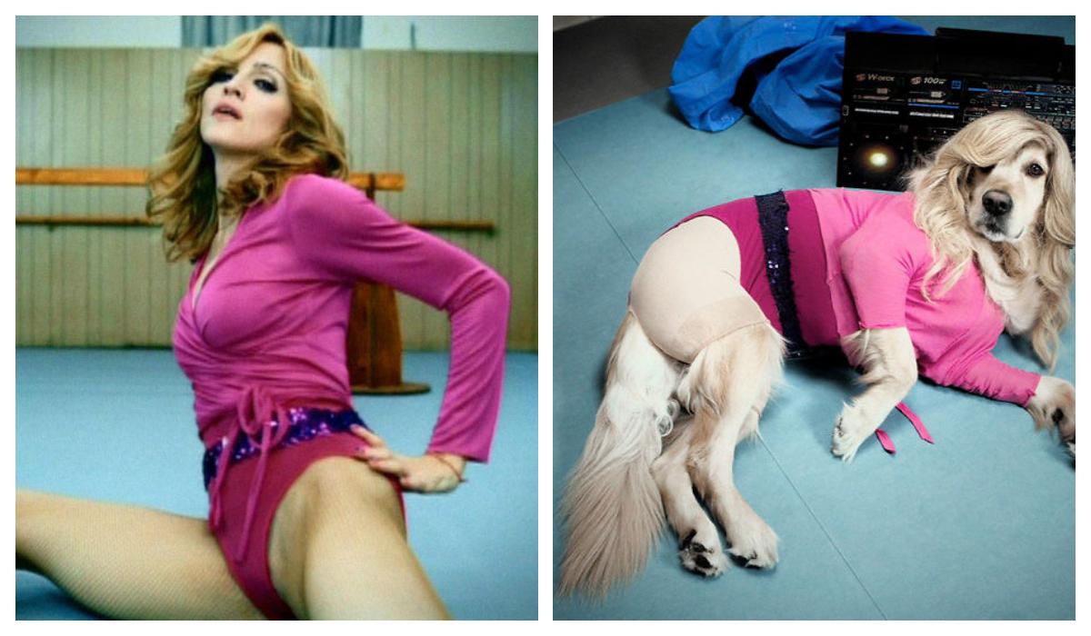 Perro recreó Icónicas fotografías Madonna maravillosas