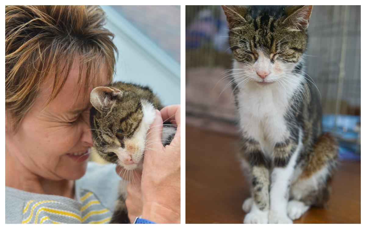 Gato encuentra su hogar después de 13 años Inglaterra