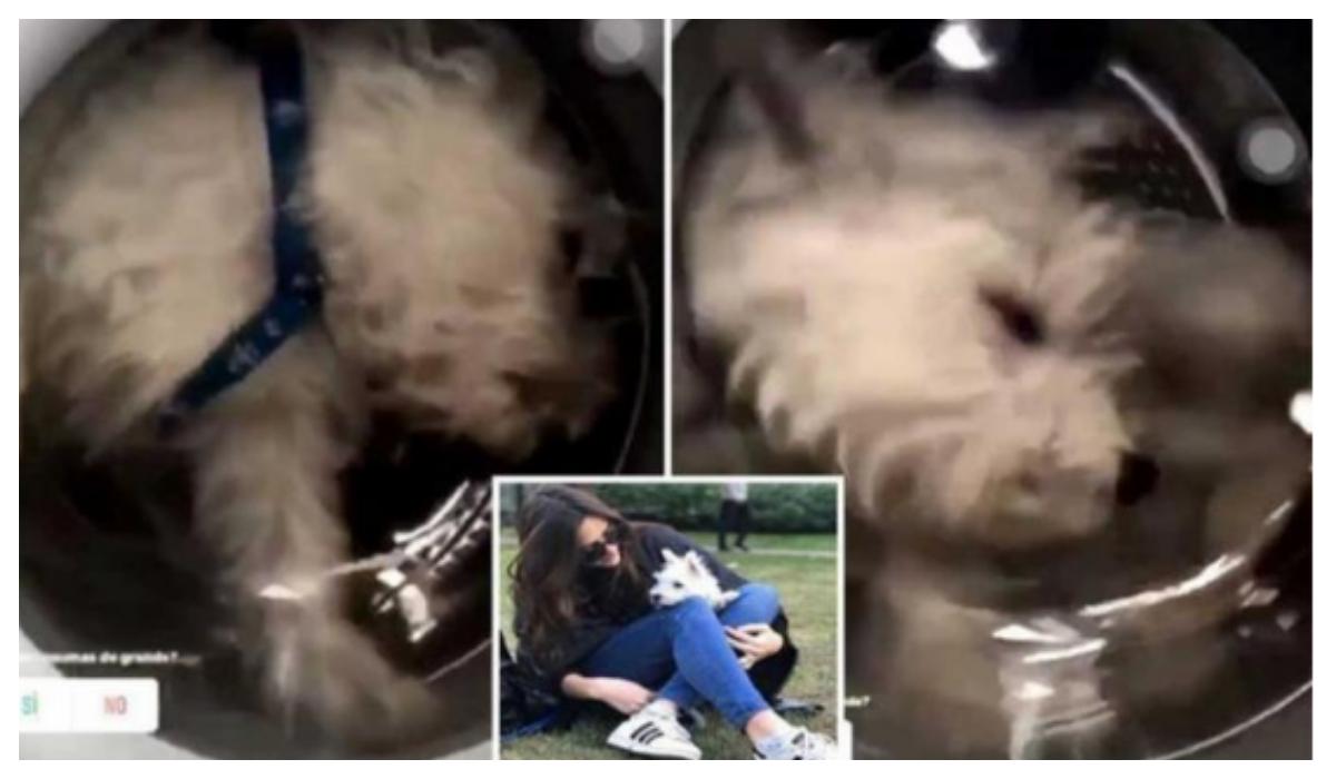 Metió a su perro a la lavadora la amenazan de muerte
