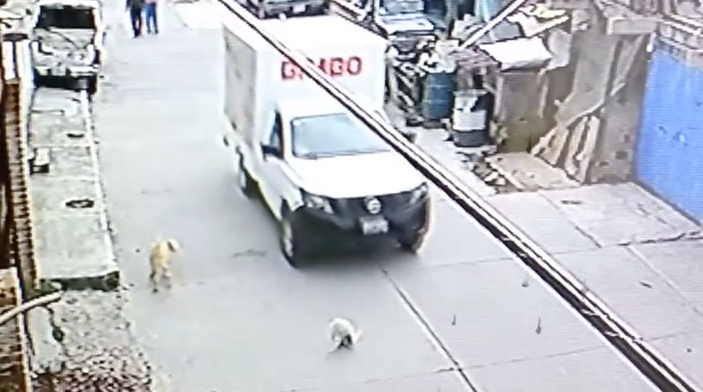 Video: camioneta de Bimbo atropella un perro y se fugó