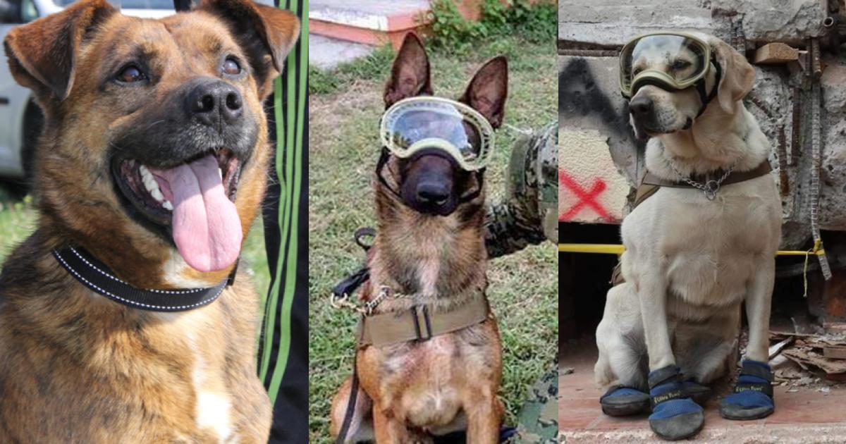 Lanzan estampilla con Frida y los demás perros rescatistas