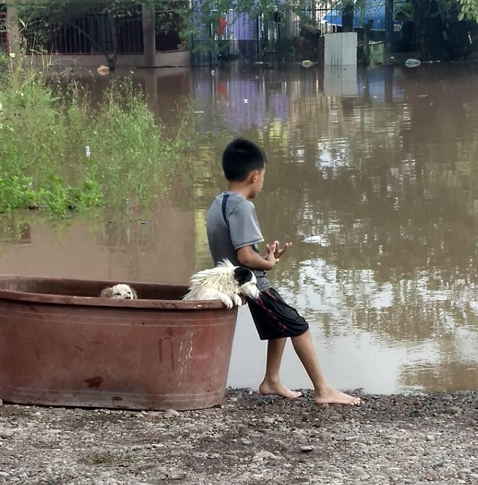 Niño rescata mascotas paso huracán Willa