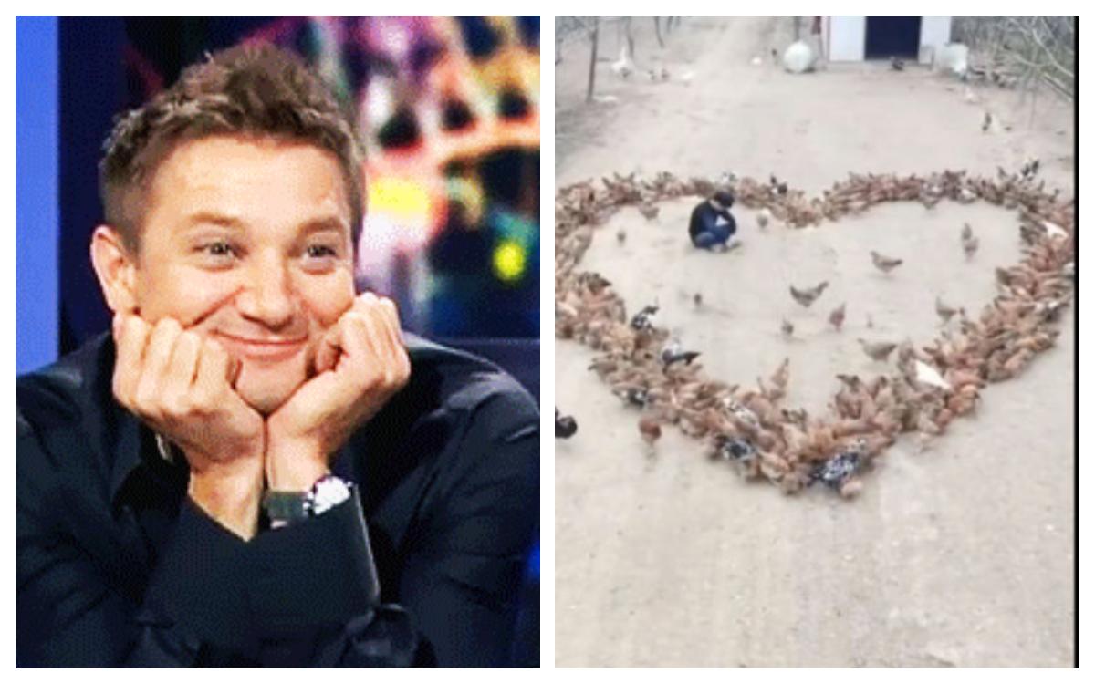 Joven granjero declara amor con cientos gallinas