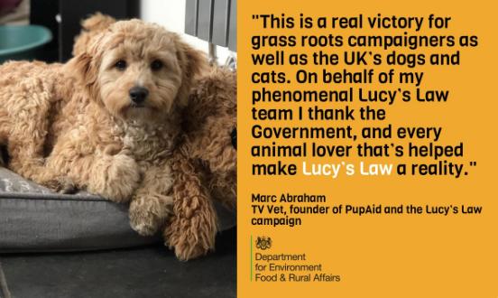 Reino Unido prohibirá venta de perros y gatos en tiendas