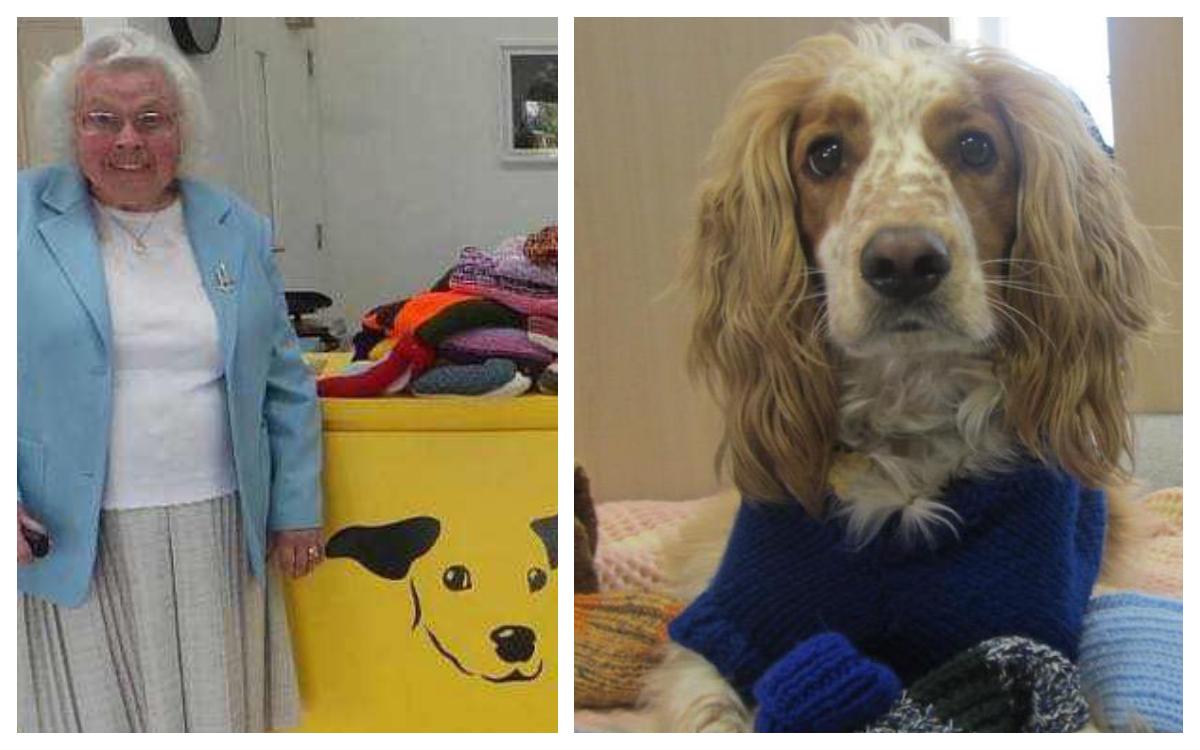 Abuelita tejió mas de 400 sweaters para perritos abandonados