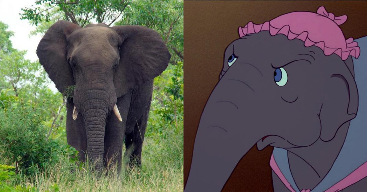 Elefante Mata Hombre Intentó Hipnotizarlo, Elefante Mata A Hombre, Elefante, Elefantes Salvajes, Hipnotizar Elefantes, Hipnotizar