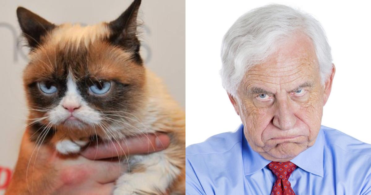 Gatos Imitan Comportamiento Humano Estudio, Gatos Imitan Personalidad Humana, Gatos, Personalidad, Humanos, Imitación