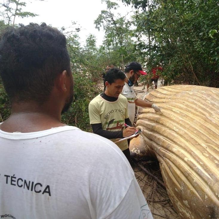 Hallan cadáver de ballena en medio del Amazonas