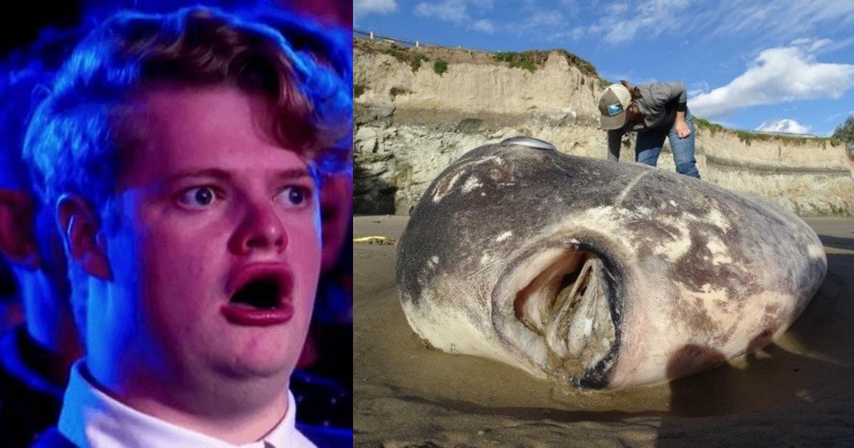 Video buzos encuentran increíble criatura marina