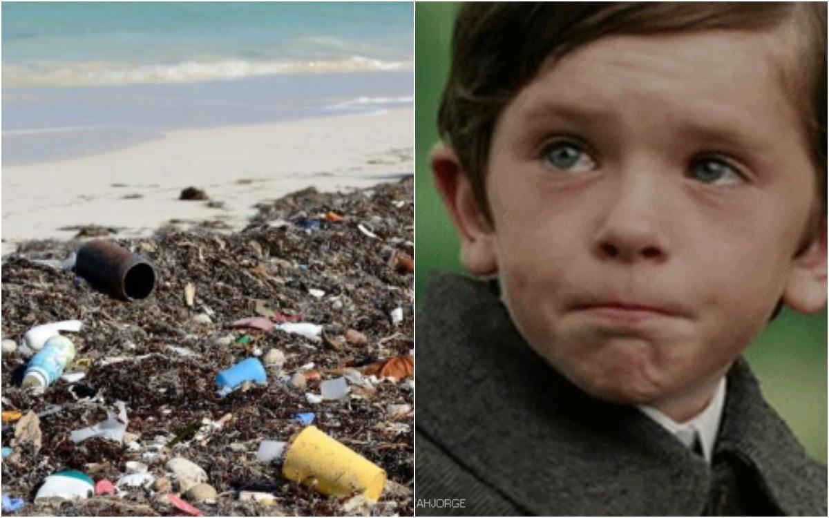 Encontraron 22 kilos de plástico en estómago de ballena