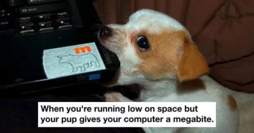 Elo Mito: recuento de videos y fotos de perros