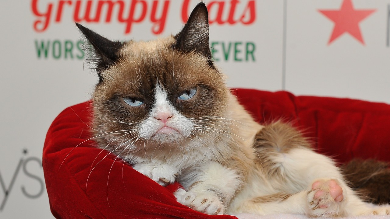 Muere Grumpy Cat, protagonista del meme del gato enojado
