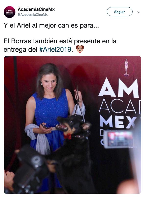 Borras gana premio Ariel al mejor pERRO