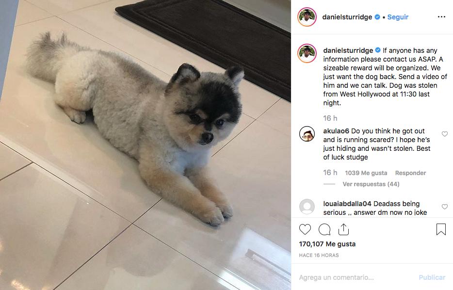 Daniel Sturridge recupera a su perro robado en Los Angeles
