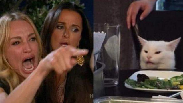 Meme Del Gato, Me Dijiste Meme, Me Dijiste Meme Gato, Smudge Lord, Meme Me Dijiste Que, Me Dijiste Que Meme Gato
