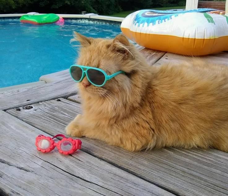 Tissy, la gatita que adora nadar