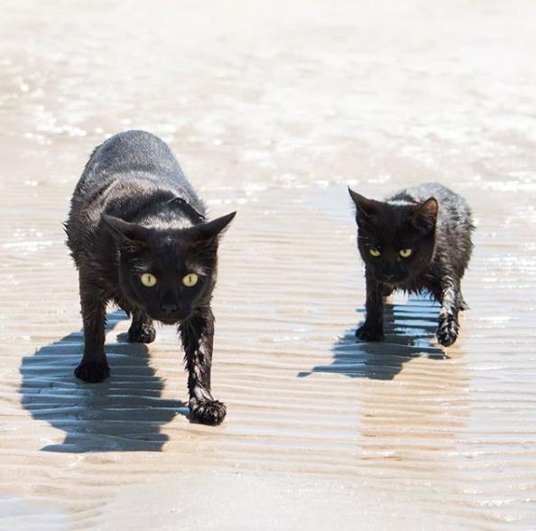 Tissy, la gatita que ama nadar