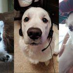 Fotos Perros, Elo Mito Videos Perros, Elo Mito Fotos Perros, Elo Mito Perros Chistosos, Videos Chistosos Perros, Elo Mito